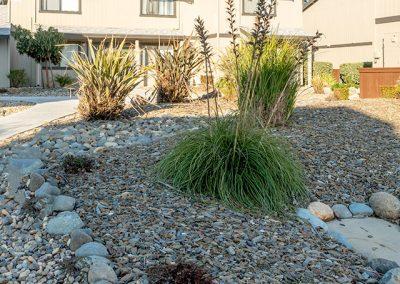 Almondwood Apartment rentals in Davis rock garden